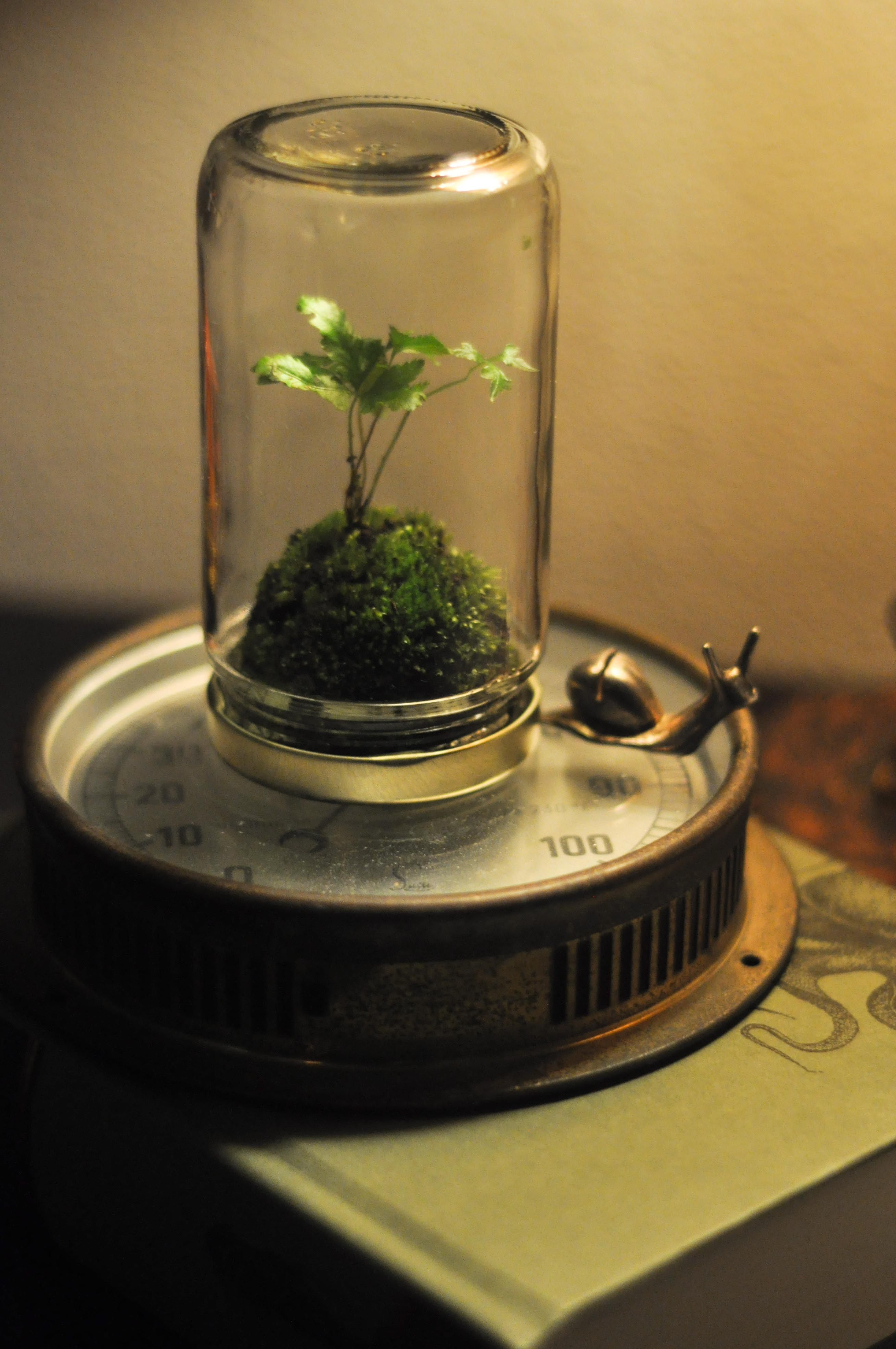 on jar terrariums yes and know. Black Bedroom Furniture Sets. Home Design Ideas